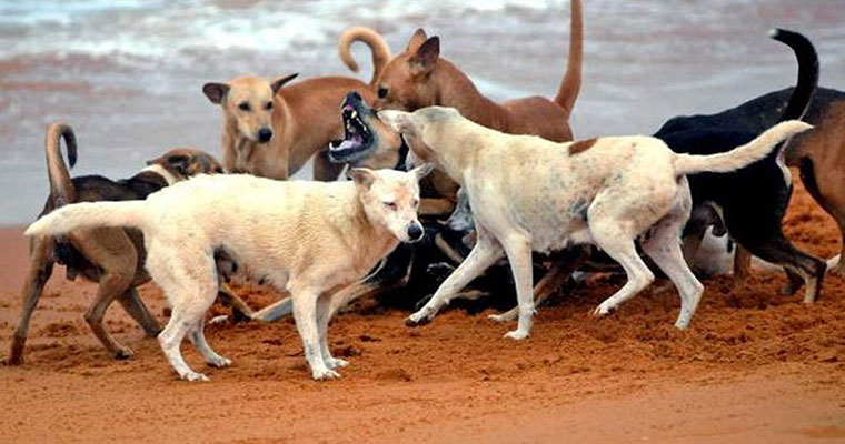 kerala govt decides to put dangerous stray dogs to death