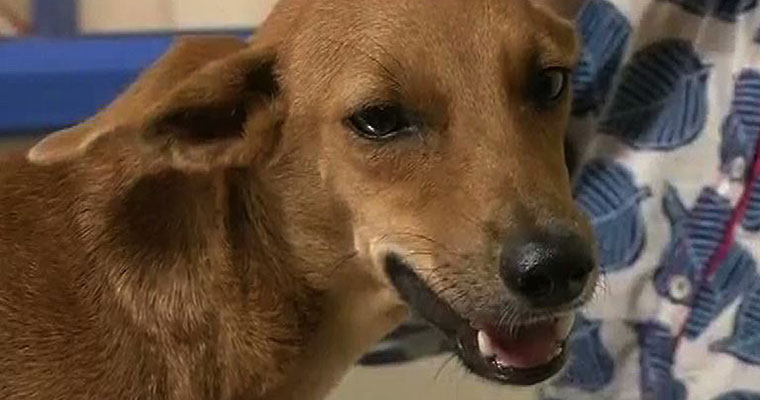 2-year-old mauled by stray dogs