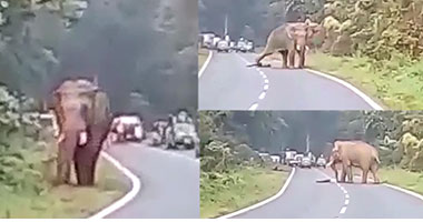 Man crushed to death by an elephant while trying to take pictures of the animal