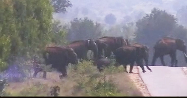 Killer elephant shot dead in India