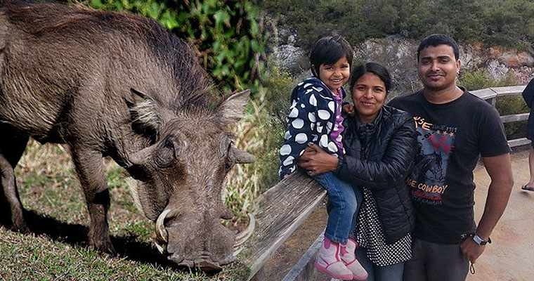NZ family may be paralysed for life from eating wild boar
